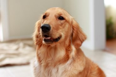 how much cbd to give your dog