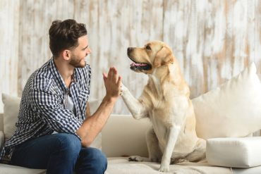 types of cbd products for dogs