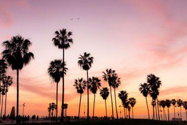California CBD quality and value