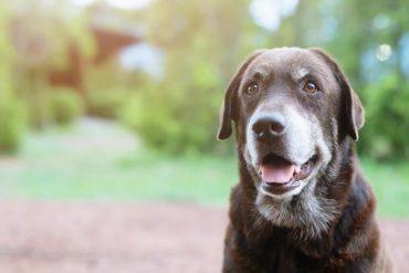 can CBD help my dog's arthritis