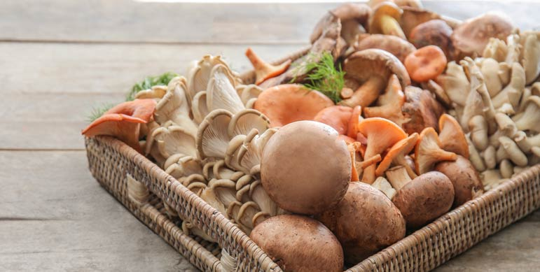 Medicinal Mushrooms to Add to Your Diet